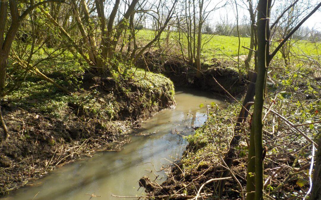 Nettoyage de printemps sur les cours d'eau