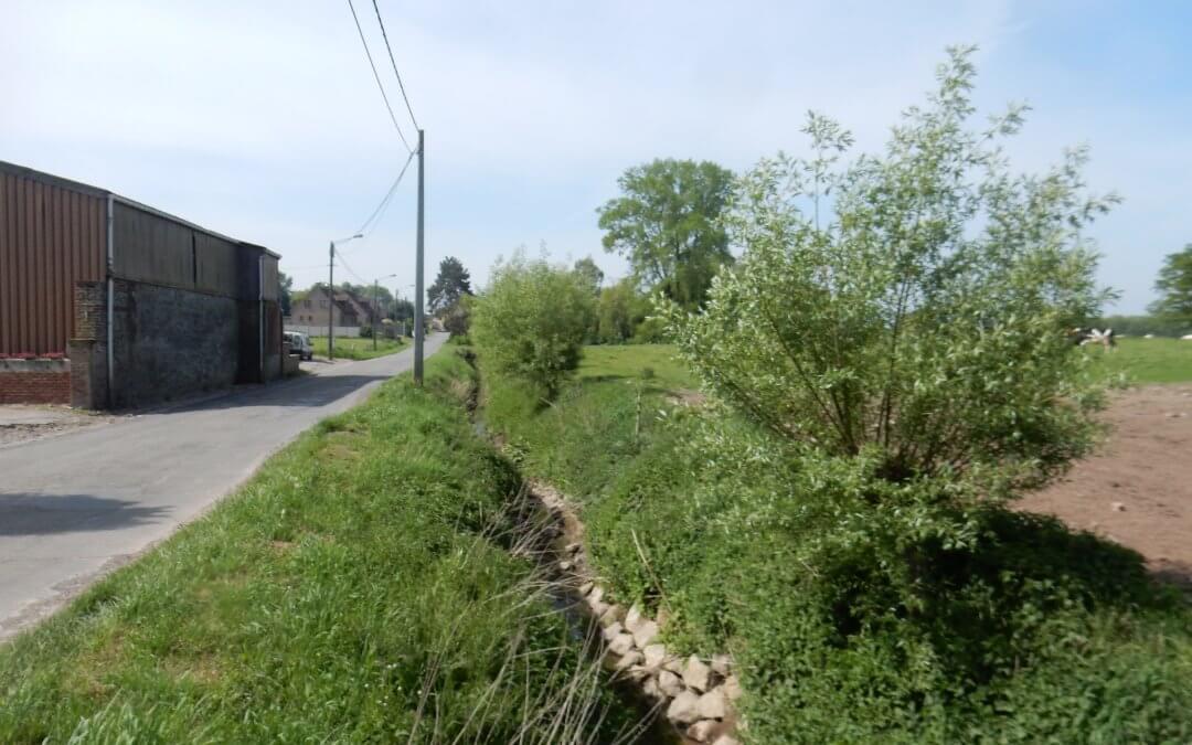 Plantation de saules sur «l'Obrecheuil»