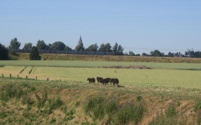Pas d'inquiétude, les moutons Soay sur les ZIT de Willemeau sont en forme !