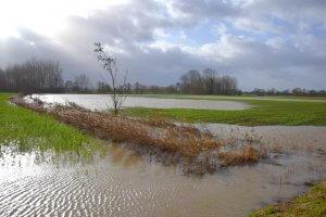 photo d'un champ à Howardies inondée par L'Elnon